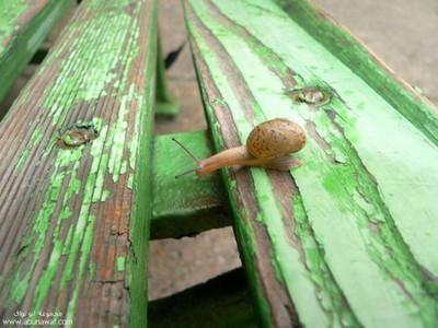 snail1_renamed_9961