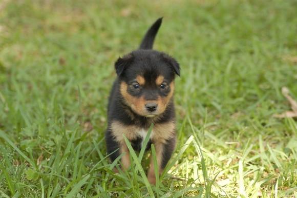 Puppies 208.jpg
